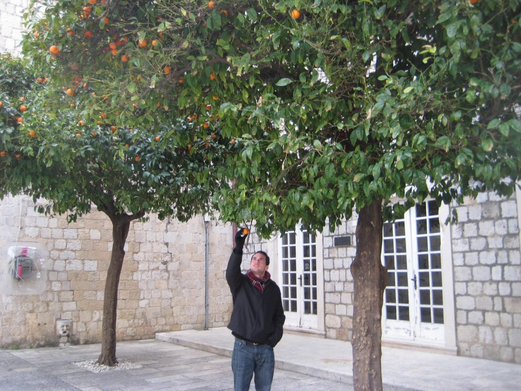 Mike Picks Oranges in Dubrovnik, Croatia