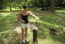 Feeding Monkeys in Siem Reap, Cambodia