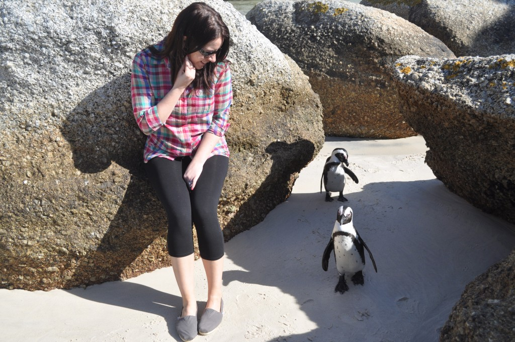 penguins in south africa on boulders beach