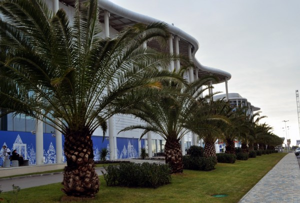 If you don't believe Sochi really is a tropical destination, here are Palm Trees. Next to the Main Press Center. In Russia. In February.