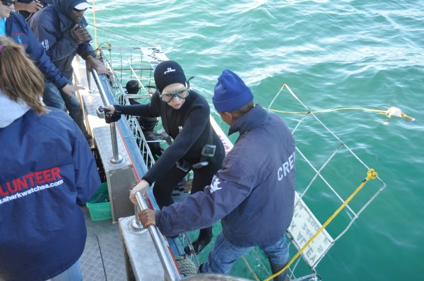 Shark Diving getting out of cage South Africa Gans Baai