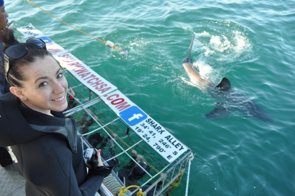 Shark Diving cage south africa
